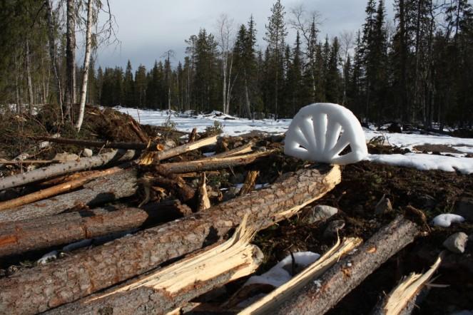 Saukko-ojan tuhottu metsonsoidinpaikka 21.4.2010